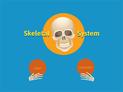 Learn The Skeletal System Game - Human Anatomy Parts