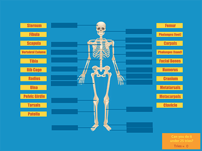 Learn The Skeletal System A Fun Interactive Game