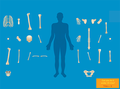 Learn the Skeletal System - A Fun & Interactive Game
